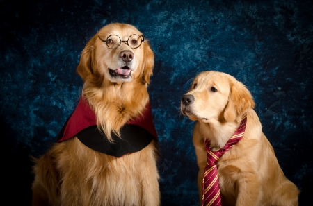 :) - red, cute, tie, caine, dog, golden retriever, animal