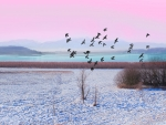 Pigeons and Winter Lake