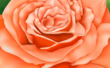 Rose Detail - flower, rose, orange, pink, design