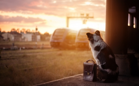 waiting for train - cute, funny, animals, dogs
