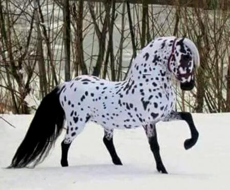 Beautiful Horse In Winter Horses Animals Background Wallpapers On Desktop Nexus Image 2453864