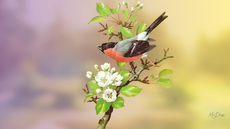 Bird - sakura, tree, bird, flowers, spring, finch, cherry blossoms, apple blossoms, Firefox theme