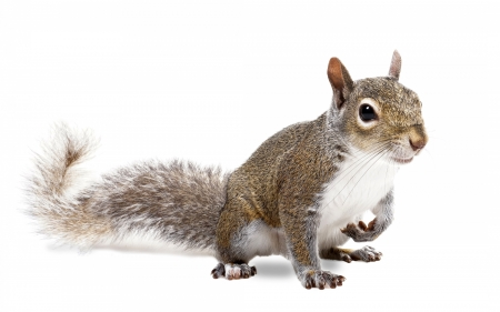 Squirrel - cute, squirrel, veverita, animal