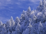 Smoky Mountains winter wallpaper