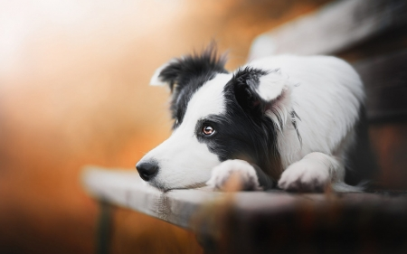 deep Thinker - cute, puppies, animals, dogs