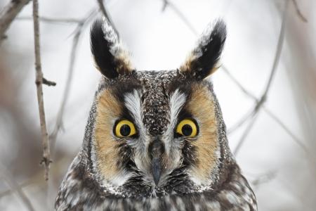 owl birds animals background wallpapers on desktop nexus image