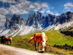 Horse in front of the montains
