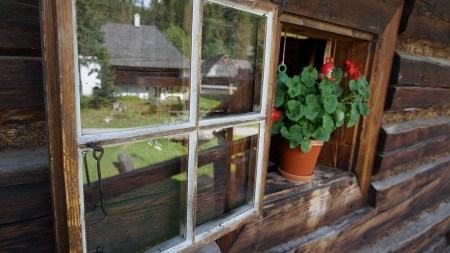 Geranium in Cabin Wiondow - flora, floral, farm, flowers, cabin, reflection, country