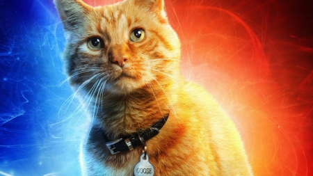 Captain Marvel (2019) - poster, fantasy, orange, the cat, comics, goose, pisici, captain marvel, movie