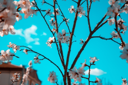 Incredible sky - sky, turquoise, photography, turkey, blossoms, aqua, spring
