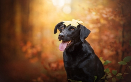 leaf on my head - cute, puppies, animals, dogs