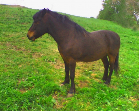 Brown nice horse - nice horse, nice brown, brown nice, brown horse