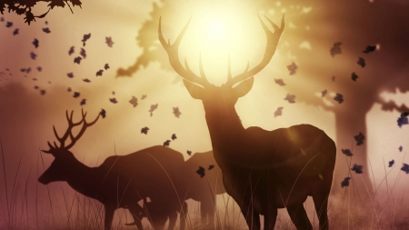 Deers - deers, sunlight, wild, animals