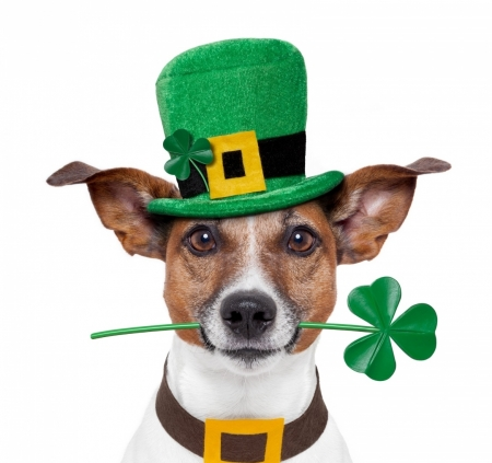 Happy St. Patrick's Day! - clover, green, jack russell terrier, caine, animal, patrick, dog, yellow, cute, funny