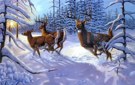 Winter Glory Winter Amp Nature Background Wallpapers On