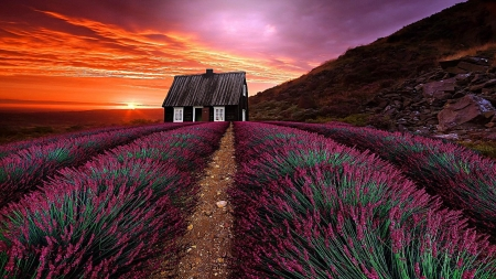 Sunset Over The Lavender Field - house, cottage, flowers, nature, sunset, lavender, sky, field