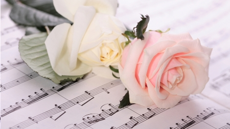 Roses and Notes - flowers, roses, notes, music, romantic