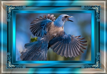 PRETTY BIRD - ANIMAL, BIRD, PRETTY, IMAGE
