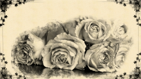 Forgotten Roses - paper, roses, old fashion, vintage, forgotten, Firefox theme, dried roses, frame, black and white, irefox theme, vine