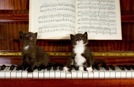Musicians - cute, keys, Musician, music, kittens, adorable, piano, sweet