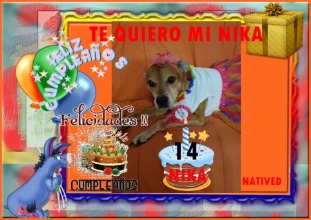 happy Birthday - nika, happy, love, dog