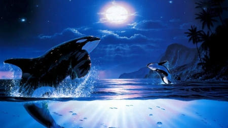 dance in the ocean - HD, whales, fantasy, ocean