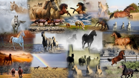 Collage of Horses