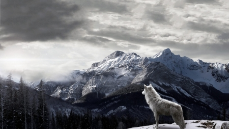 Call of the wild - nature, wolf, wolves, winter, animals, forest, snow, wallpaper, mountains, wild, wildlife