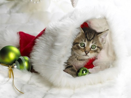 Kitten In The Stocking - kitty, christmas, cue, cat, other, santa, ornaments, kitten, stocking
