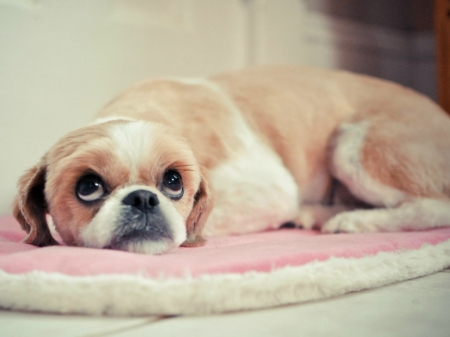 AWWW WHATS UP - PUPPY, CUTE, SAD, LOOKING