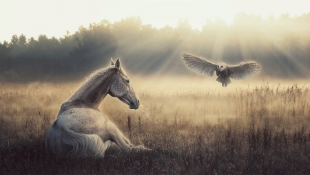 The Messenger - owl, sunlight, browns, beautiful, Horses, Nature, meadow, softness