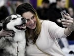 A guest takes a selfie with an Alaskan malamute