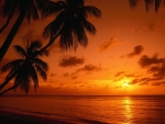 Tropical Sunset