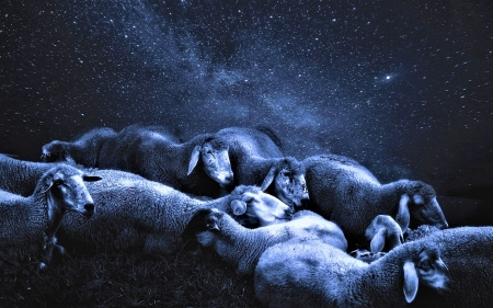 Sheeps and stars - sheep, fantasy, oaie, oi, white, night, blue, star