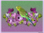 BUDGIE ON FLOWERS
