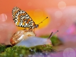 Snail and butterfly