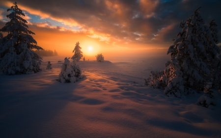 Snowy Sunset - sunset, forests, nature, snow, clouds