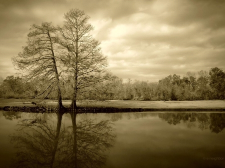 Twin trees in sepia - water, nature, trees, reflection, twins, lake, sepia, rural, still, calm