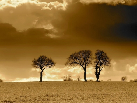 Stormy - sepia, sky, storm, clouds, trees, field, weather