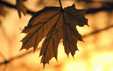 Sepia leaf - sepia, photography, lief, brown, autumn