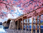 Bridge in Spring