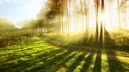 Amazing sun - rays, grass, silhouettes, nature, sunrise, country, trees, forest, rural, photography