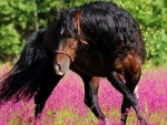 Horse in Spring