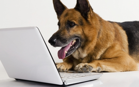 Where's my App ? - funny, laptop, shepherd, dog