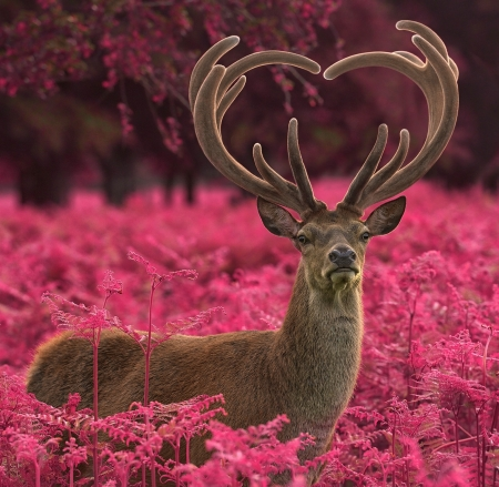 Deer - cerb, deer, animal, max ellis, pink, horns