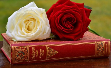 Shakespear and Roses - shakespear, white, red, death, books, reading, love