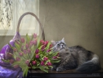 Tulips and Cat