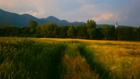 Field in summer - hrvatsko zagorje, mountain, croatia, nice, grass, summer, beautiful, field, pretty