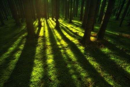 ♥ - forest, tree, johannes plenio, green, shadow