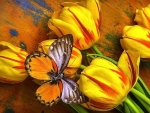 Butterfly on Yellow Tulips